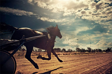 The Horse Races by Kalle Gustafsson